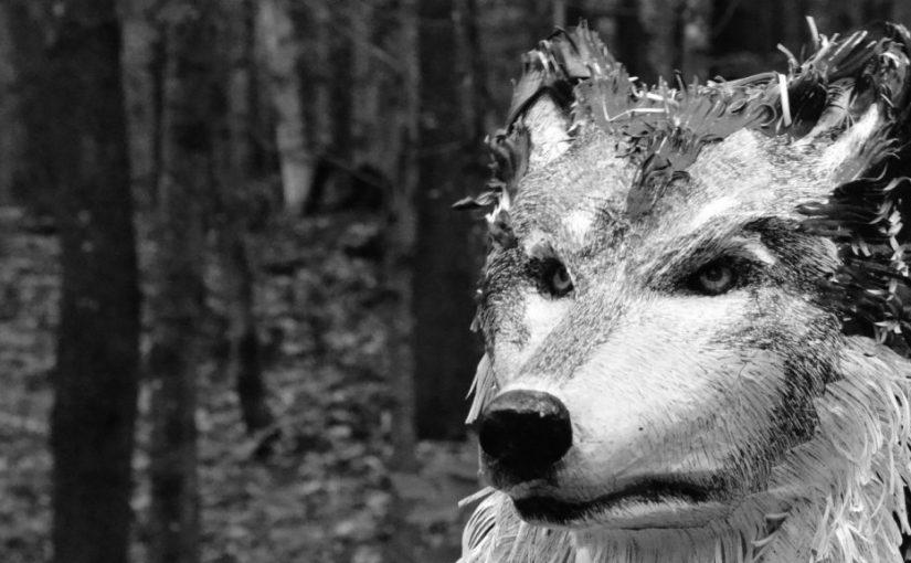 Loup y es-tu ? MagaliChouinard